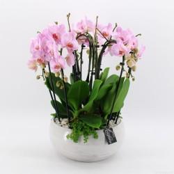 Centro con orquídeas naturales