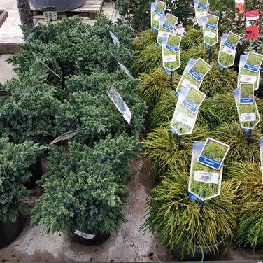 Planta de exterior