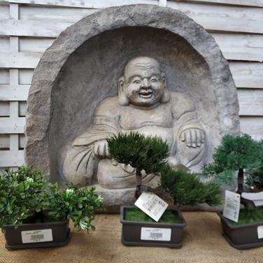 Budas para jardín